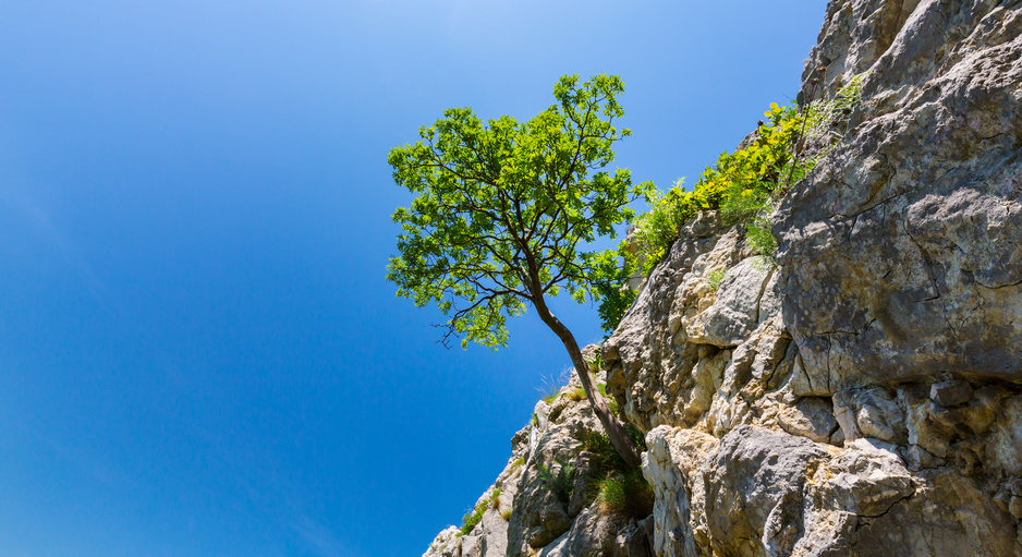 tree hanging off a rock