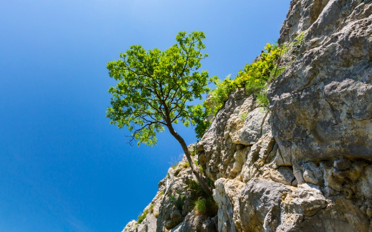 tree hannging on a rock