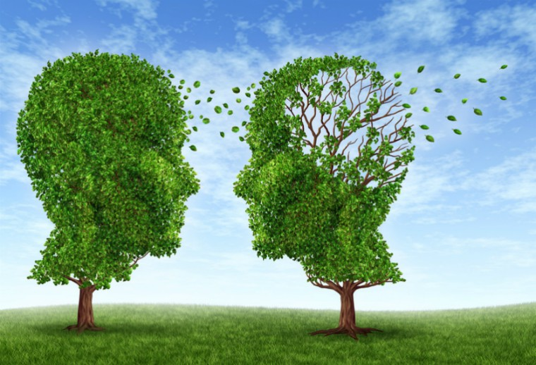 Two trees in the shape of a human head and brain