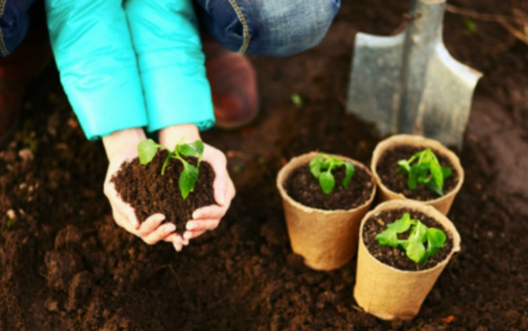 growing plants - development