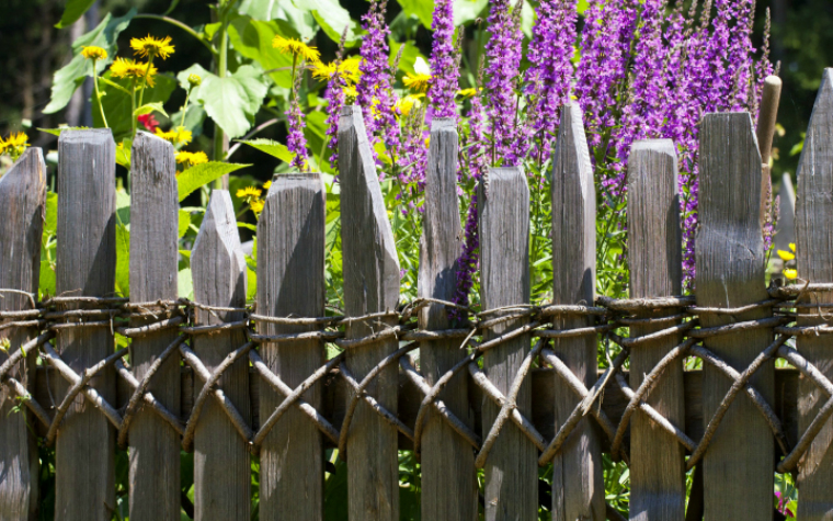 description_of_image_used_in_professional_boundaries_guide_garden_fence_and_plants